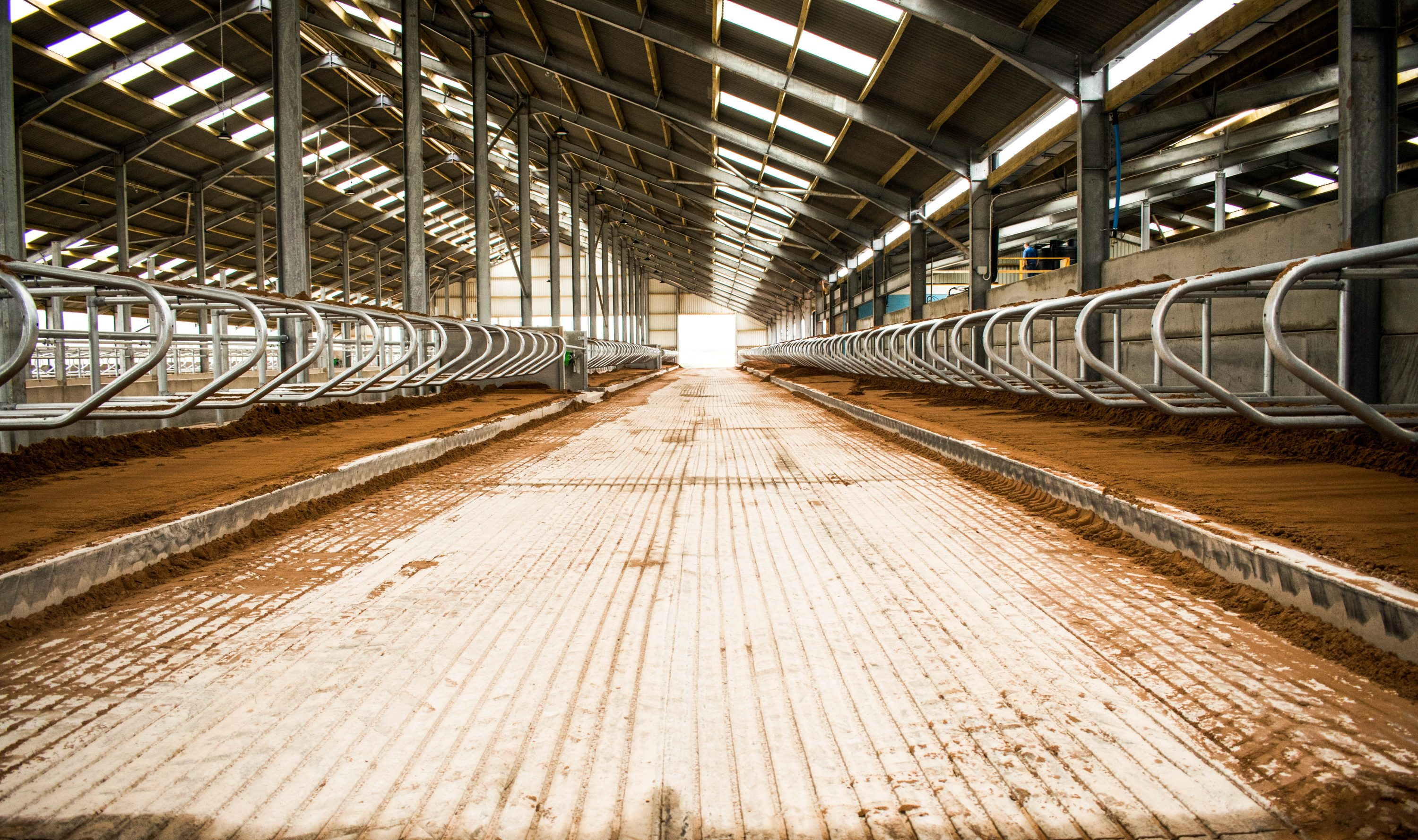 Steel-Framed Dairy Shed by Robinsons Agricultural
