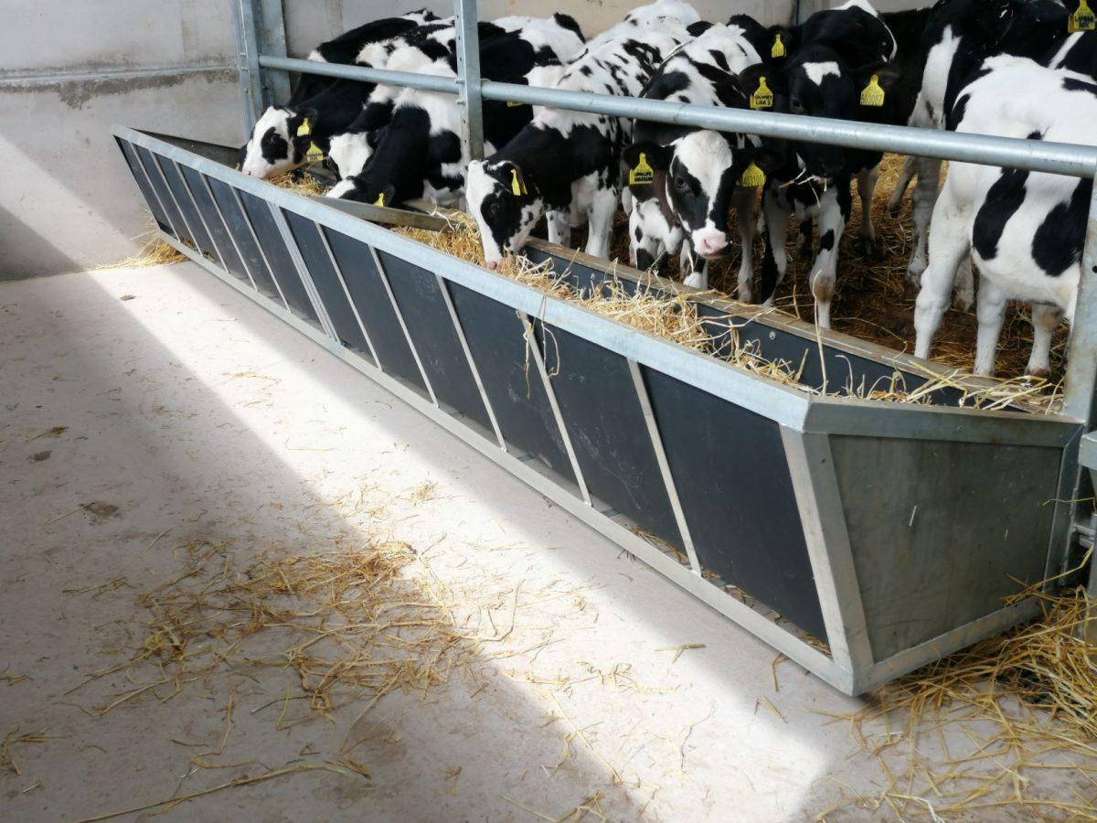 Calf Housing Example