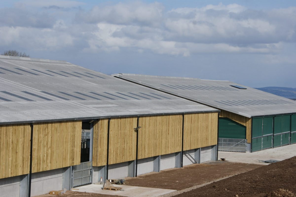 Knocknagael Bull Stud Facility -Steel-Framed Beef Shed by Robinsons Agricultural